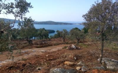 Olive Grove With Sea Views Close To The Beach