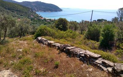 Οικοδομήσιμο ελαιόκτημα με θέα θάλασσας στο Μικρό