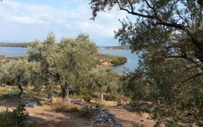 Olive grove with amazing sea views in Mavri Petra