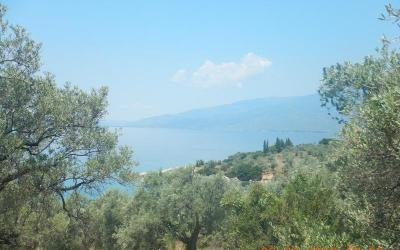 Buildable olive grove only 50m from the sea