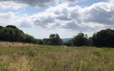Buildable land plot in Argalasti