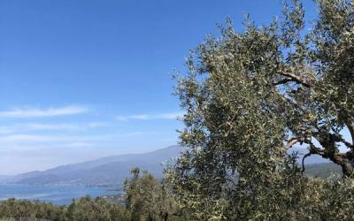 Two buildable land plots with panoramic sea view above Lefokastro